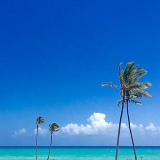 Beaches in Hawaii Palm Trees
