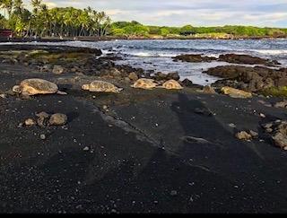 Beaches in Hawaii Black Sand Beach