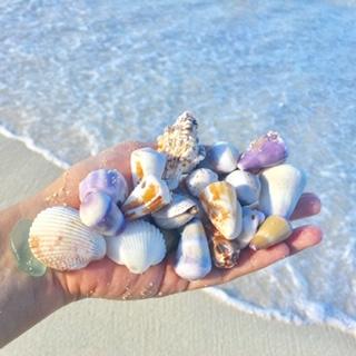 Beaches in Hawaii Shells in Hand